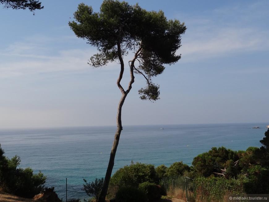 С этой стороны сады ограничивает обрывистый берег моря.