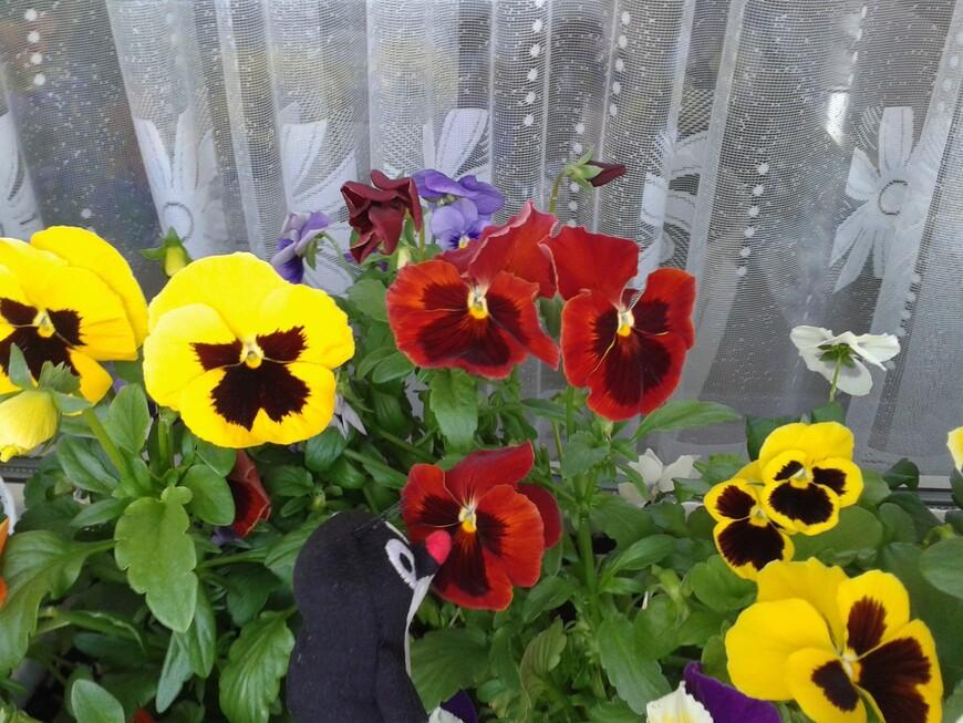 Больше, чем рыть норки, кротик любит нюхать цветочки на моем балконе :-)   www.gidvprage.com