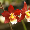 Орхидеи - величественная красота и буйство красок