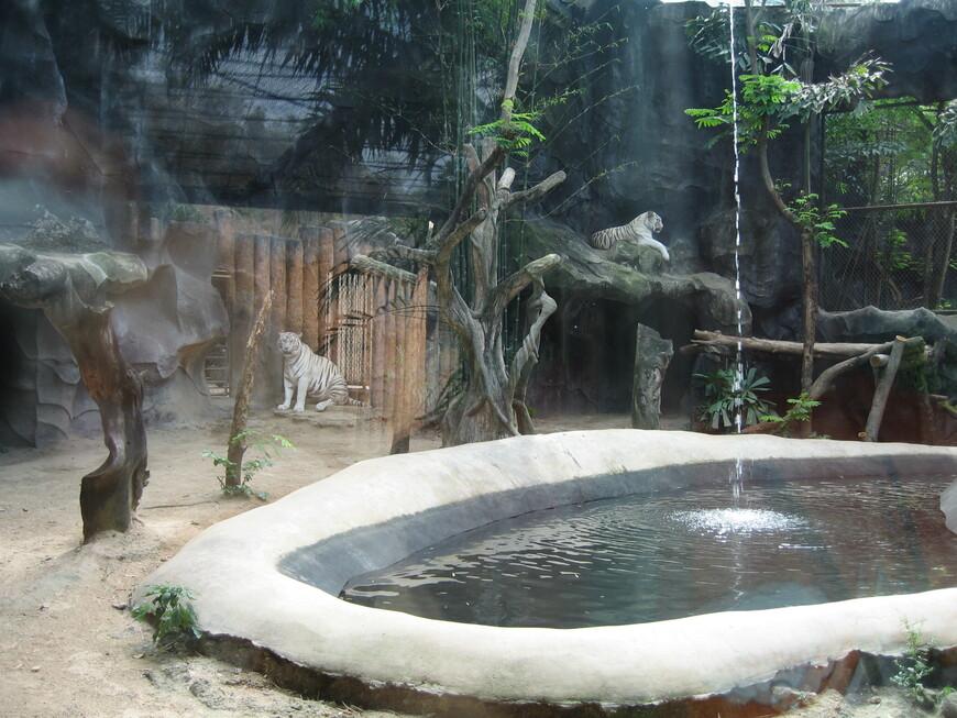 А вот белые тигры за стеклом