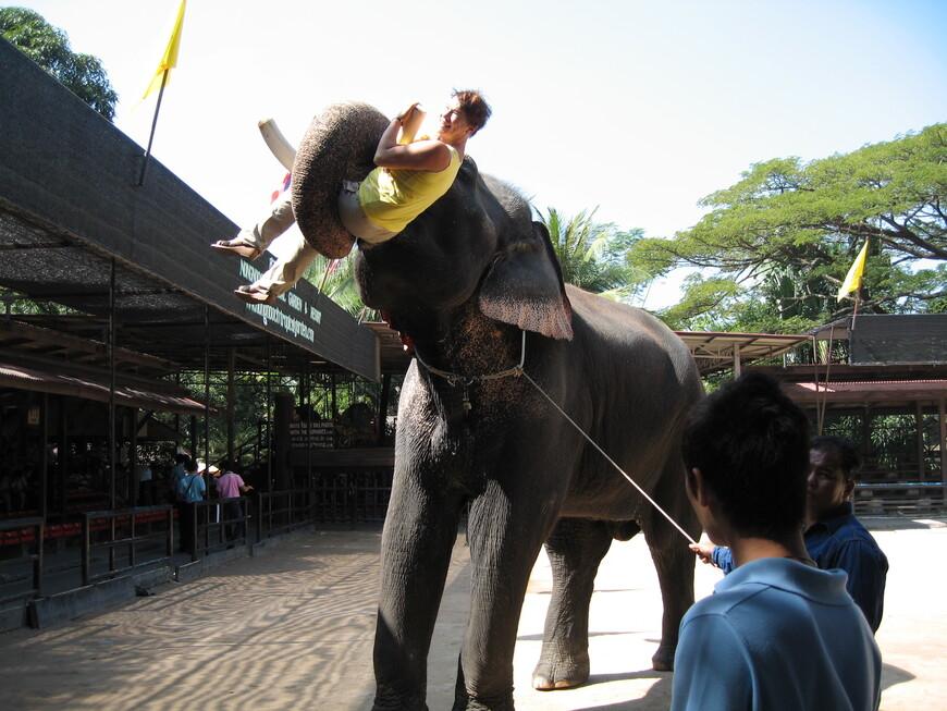 После шоу можно со слоном пообщаться...