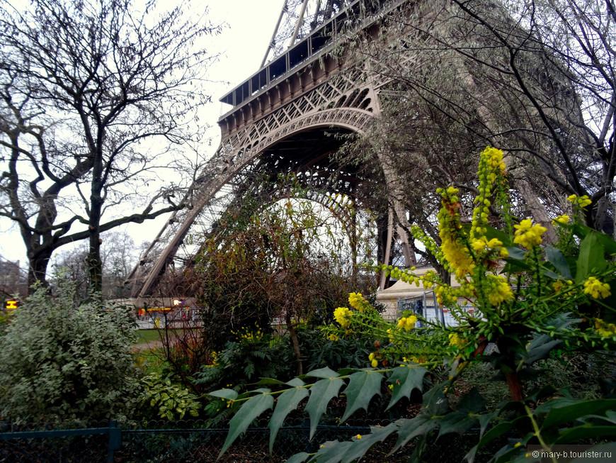 Садик у подножия Эйфелевой башни. И ухитряются же какие-то цветочки цвести в январе.