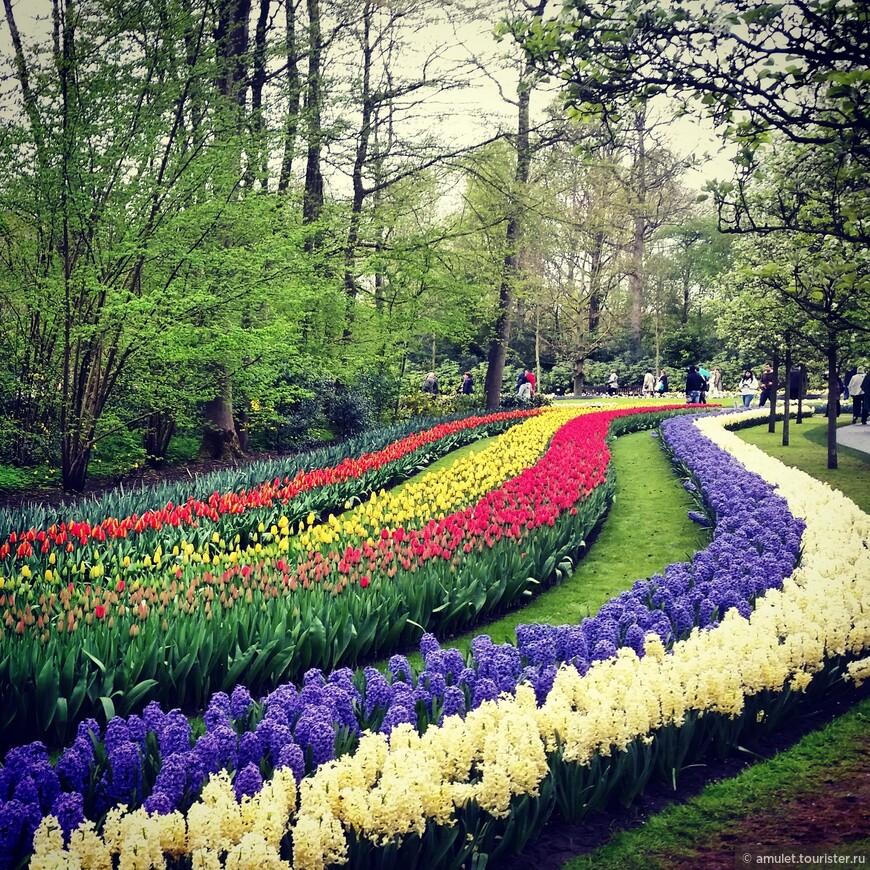 Тюльпаны, гиацинты, нарциссы .... запах стоит головокружительный!!!!!!