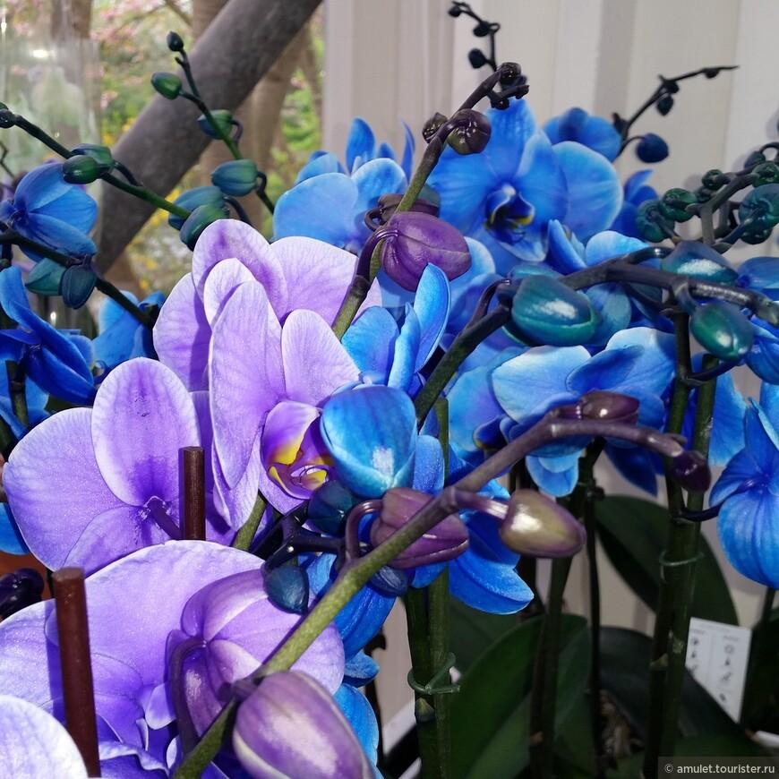 На территории парка 5 закрытых павильонов с композициями лилий, орхидей и других цветов.