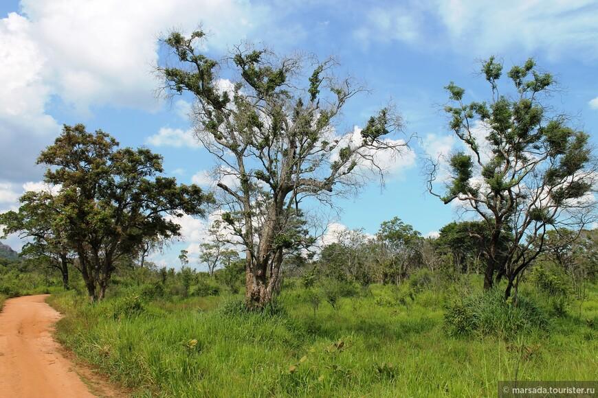 если сравнивать с африканским сафари - гораздо зеленее, соответственно трава выше, и животных увидеть сложнее