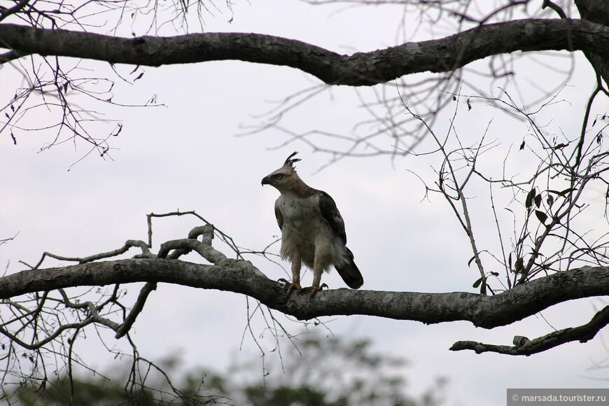 а во и второй орёл