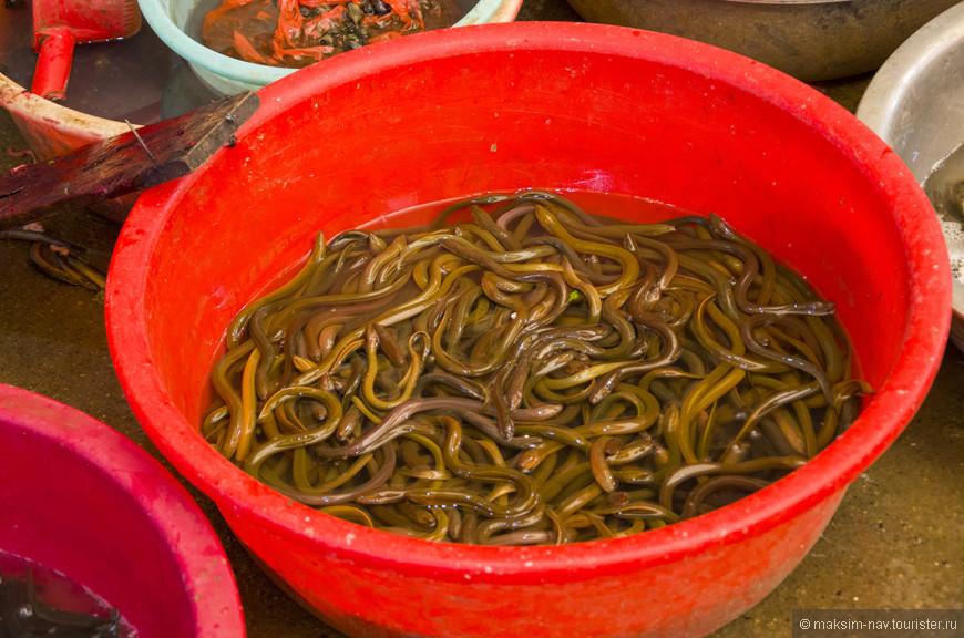 … то с разными червями дело обстояло гораздо сложнее. Одно дело знать, что в Юго-Восточной Азии едят всё что движется, другое видеть всю эту «аппетитную» «вкусняшку».