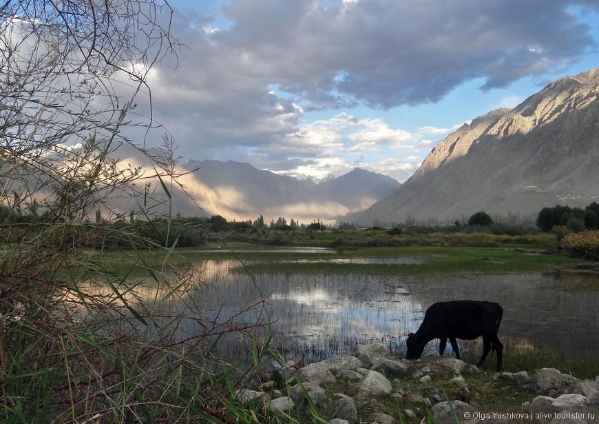 Вот такие вот сказочные пейзажи в этой долине встречаются фактически на каждом шагу...