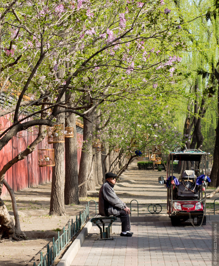 утром пенсионеры приносят клетки с певчими птицами в парки и скверы