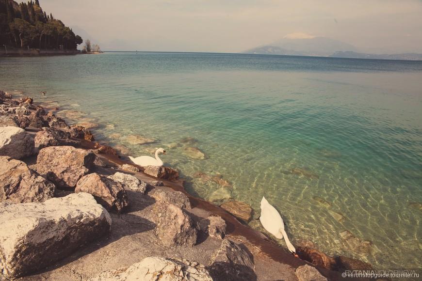 Озеро Гарда и его обитатели