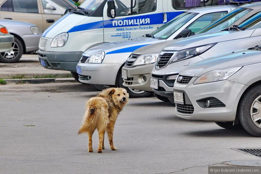 23. Ростовский пес, сколько печали во взгляде…