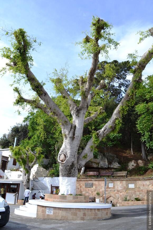 Дерево на входе в город.