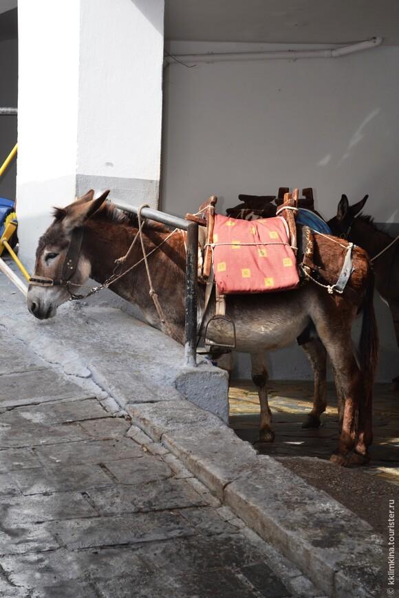 Ослики - непременный атрибут города. Они в Линдосе заменяют такси, доставявляя туристов до Акрополя.