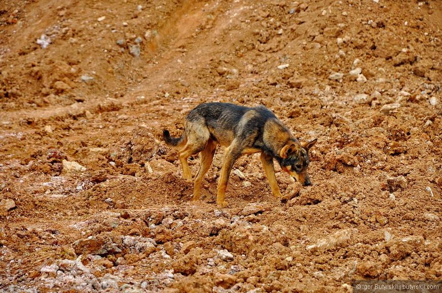 34. Самая инновационная собака в стране.