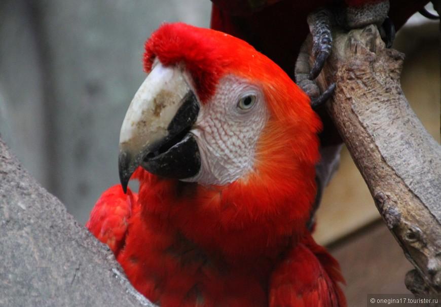 Помните сварливую семейку? Вот этот попугай смотрел на них с нескрываемым интересом и просто наслаждался их воплями и дракой. Я вот думаю, может его Яго зовут и он ждет сцену удушения? Или так, соседка с балкона наслаждается страстями, которых у нее давно уж нет? В Колумбии кипели эдакие страсти...