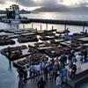 Рыбацкая пристань и Пирс 39 — это многолюдное место с многочисленными магазинами, ресторанами, кафе, ярмарочными площадками откуда можно любоваться чудесным видом на океан и Остров-тюрьму Алькатрас или просто наблюдать за колонией морских котиков