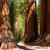 Достопримечательность парка – это несколько видов гигантских секвой, в том числе в роще Марипоса