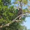 обезьяна пиет Sprite