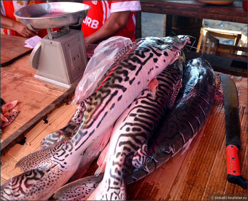 Популярная  речная рыба Ла Донселья.