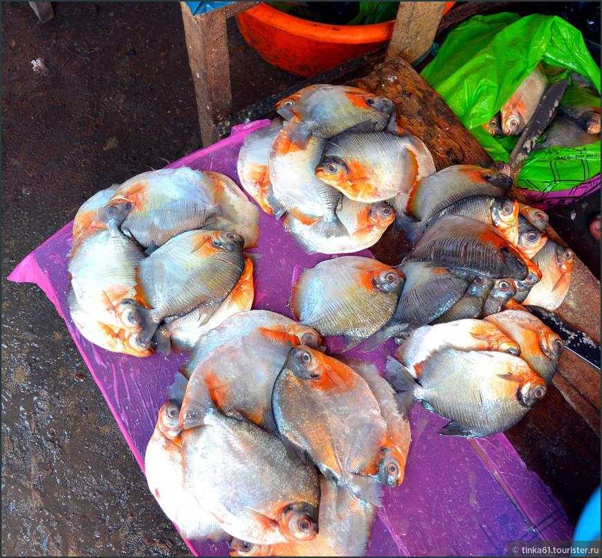 Самые опасные рыбки пираньи.