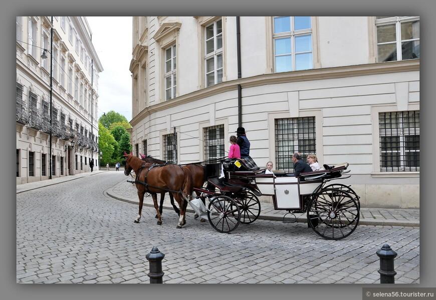 Фиакры придают экзотичность венским улочкам в старом городе, но у центрального собора Святого Стефана их так много, что оставаться на площади рядом долго  сложно. Каждый день мы заходили в храм,но убегали бегом от ароматов прекрасных лошадок.