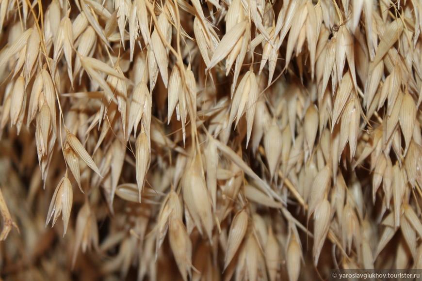 Зерно — основа хлеба.