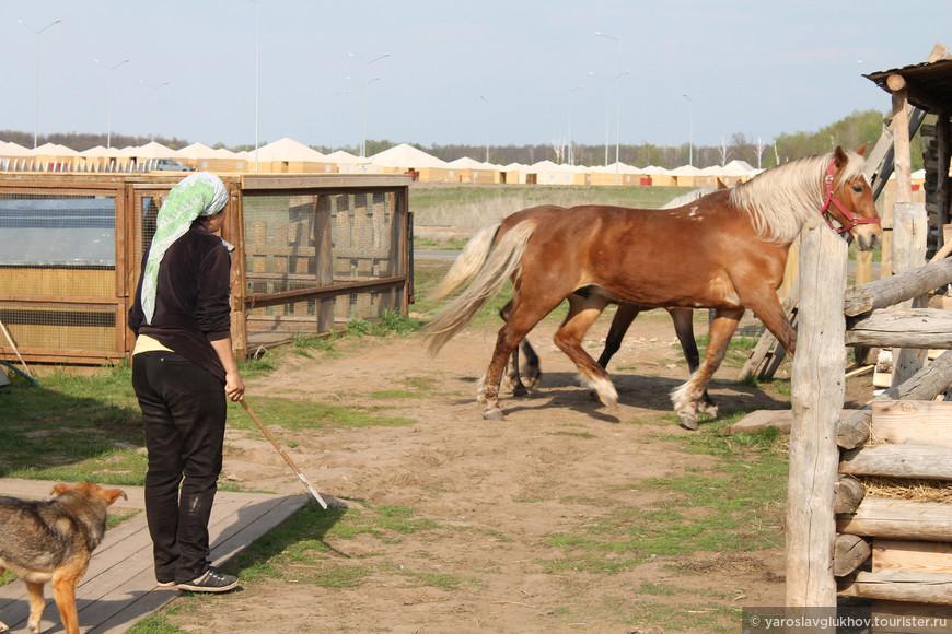 Хозяйка загоняла лошадей.