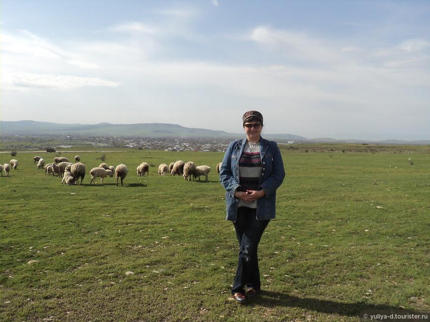 Кахетинские овечки часто перекрывают дороги и приходится ехать в море овечек. Эти мирно пасутся
