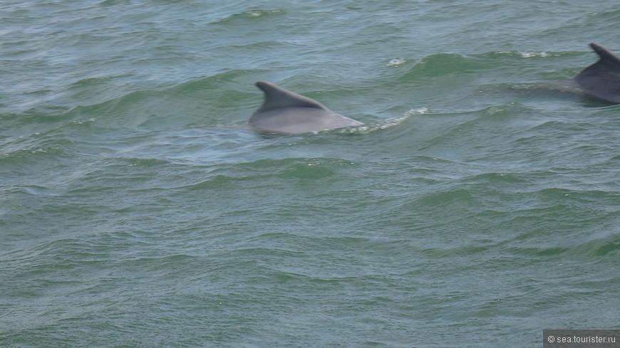 и даже увидеть дельфинов