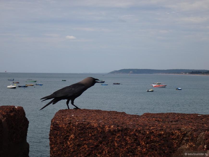 черный птиц