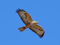 Птицы Армении