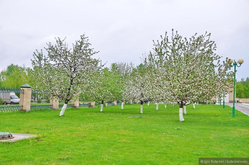 06. Как и все города Татарстана, Нижнекамск очень зеленый, все аккуратно подстрижено, нет ни мусора, ни грязи. Только вот деревья по-совковому уже нигде не красят.