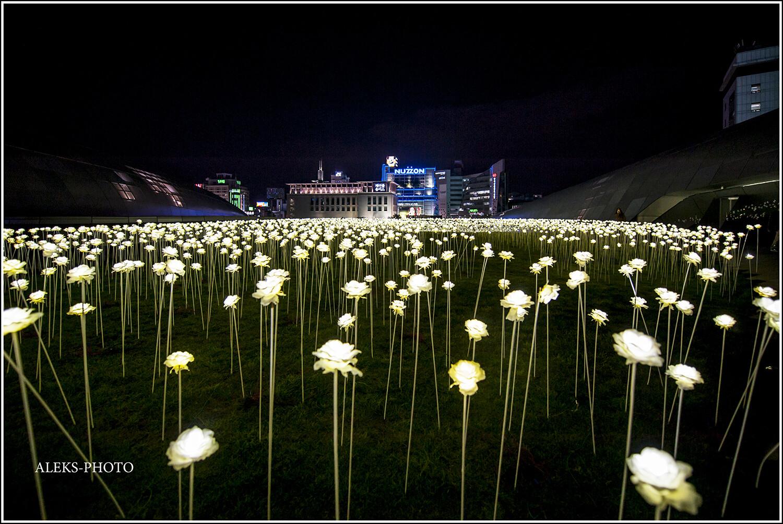 Мертвые днем искусственные цветы вечером как будто оживают и наполняются электрической жизнью. Так и хочется представить, как некие роботы 22 века ходят и нюхают здесь искусственные ароматы. Хотя нет - пусть уж лучше мир остается живым и цветы - тоже..., Футуристический Сеул XXI века (Южная Корея)