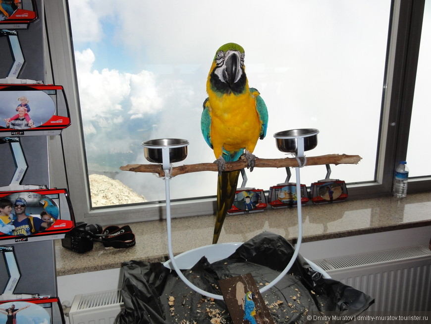 Там живет веселый попугай