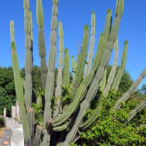 Не удержалась и влезла в чей-то двор, чтоб сфотографировать кактус.))