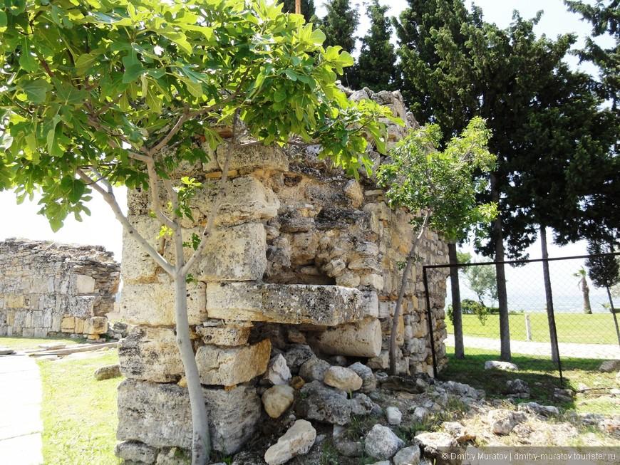 Как красиво выросли молодые деревья в стенах развалин Иерополиса
