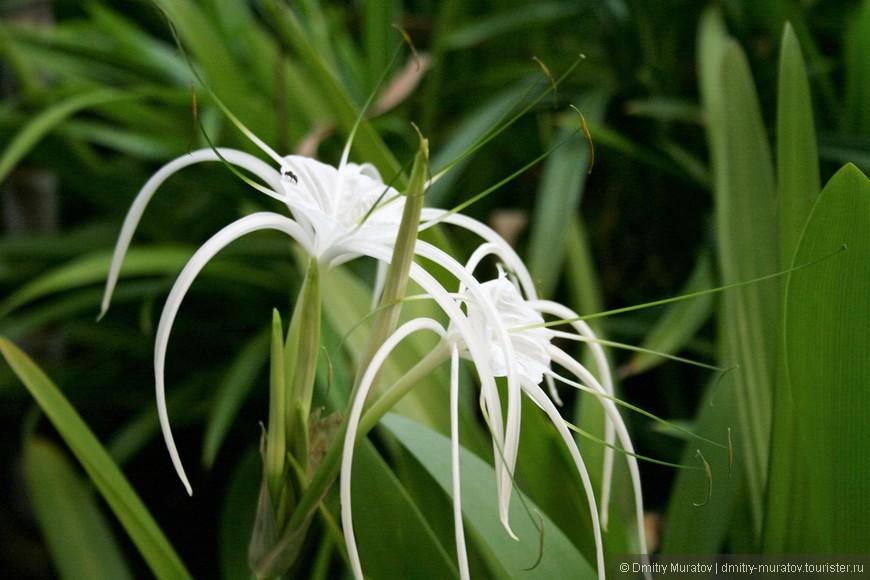 Необычные цветочки