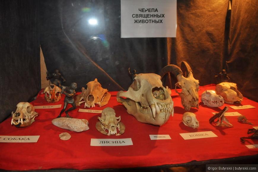 02. В небольшом помещении музея расположились с десяток композиций (сценок) и несколько витрин, в них находятся черепа животных.