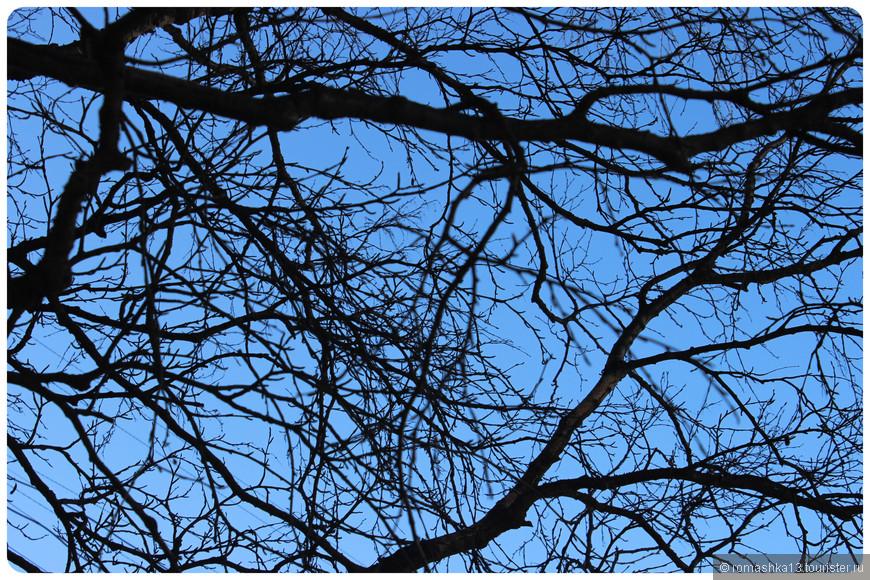 Кружево ветвей
