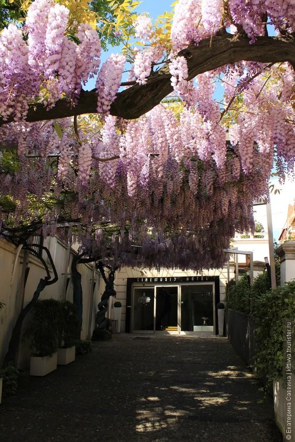Апрель, акации  в цвету. Наш отель находился в спальном райне Рима, но был очень уютным и атмосферным