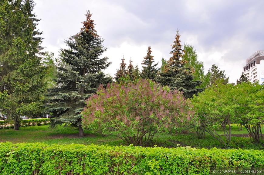 12. В Набережные Челнах, как и во всем Татарстане, очень много зелени.
