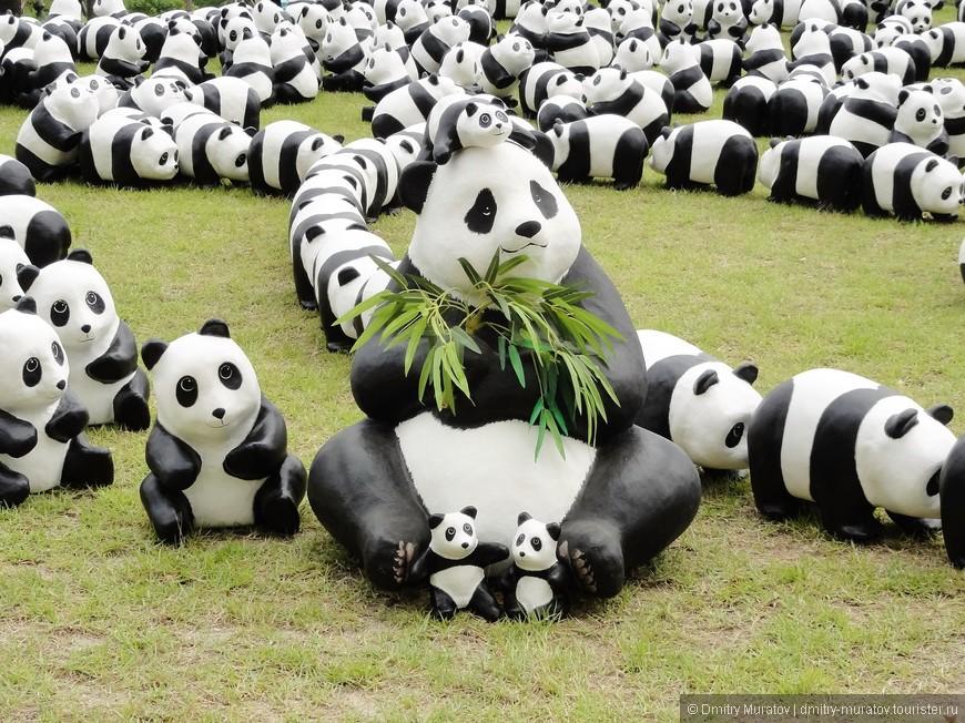 Кому не нравятся такие обаяшки, как панды? В Корее тоже по ним сходят с ума. Правда мило?