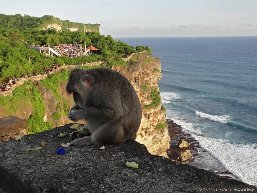 А ещё здесь живут очень забавные обезьянки... ))) Правда, они крайне хулиганистые и иногда выступают в роли потрошителей... )))