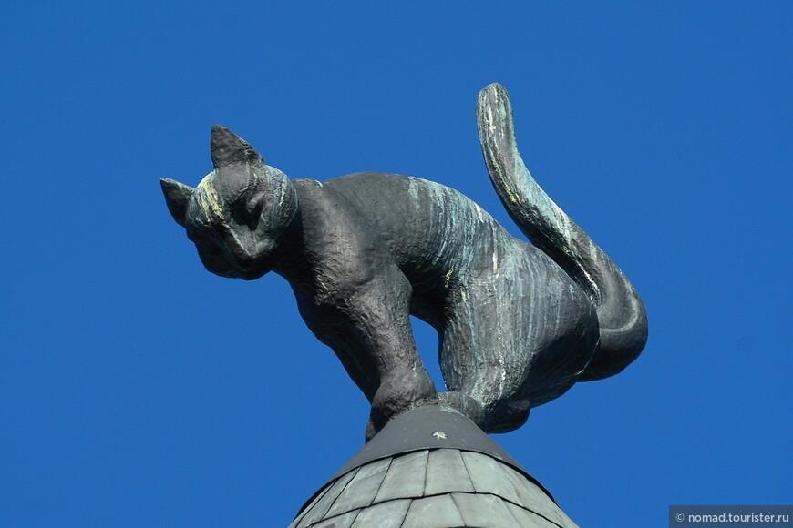Одна из знаменитых кошек с Кошкиного дома