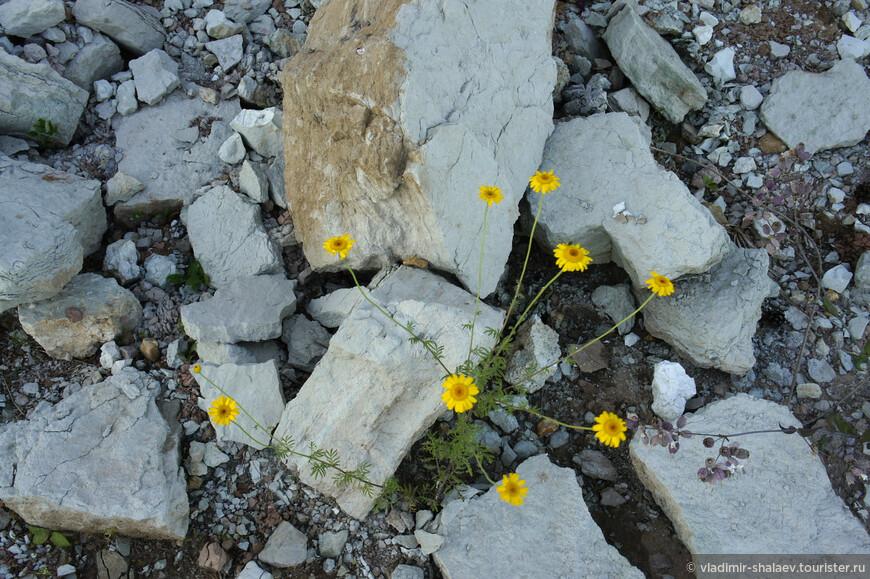 Жизнь на камнях.