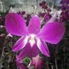 цветы -орхидея
