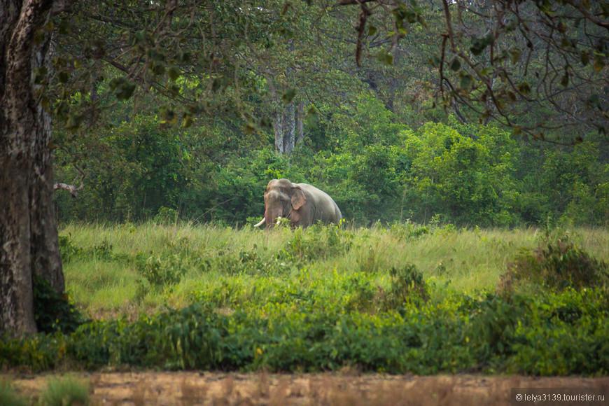 Заповедник Бардия. Слон выходит и идет проверять дорогу для своих соплеменников