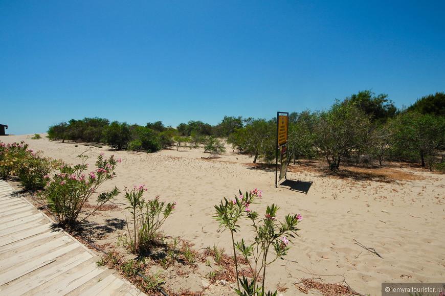 наверно из-за сильного ветра деревья на пляже не высокие