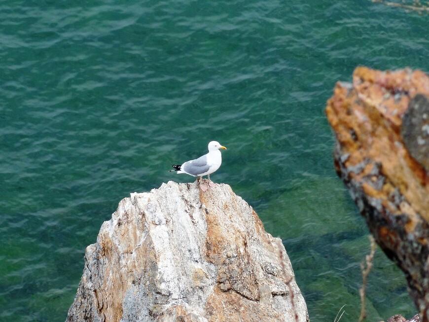 Чайки на Байкале очень красиво смотрятся