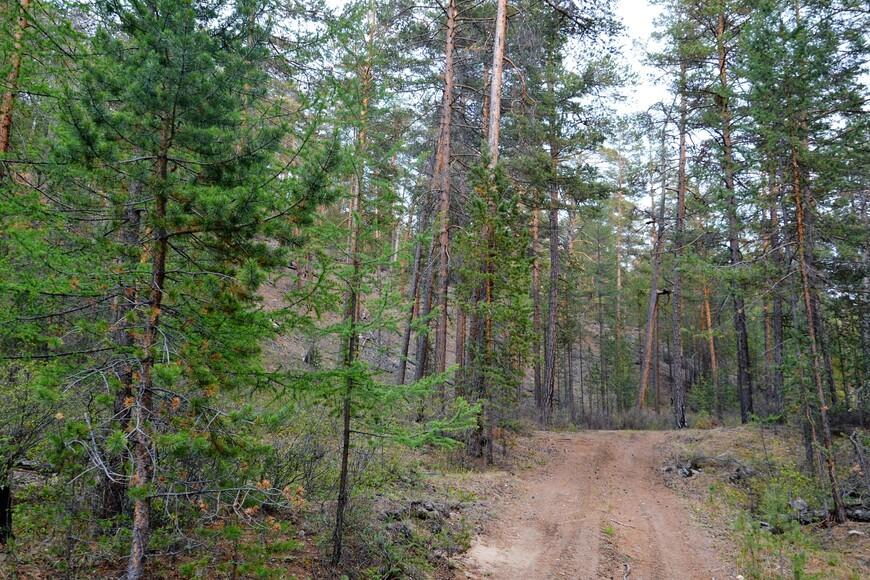Катаясь по острову можно уткнуться вот в такой густой лес!
